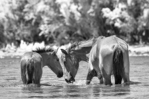 Mare And Foal Photograph - Family Traditions  by Saija Lehtonen
