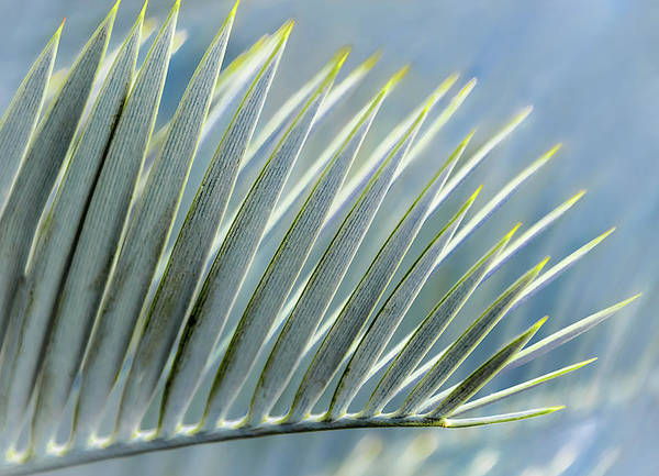 Photograph - Fan Of Spikes by Robert Mitchell