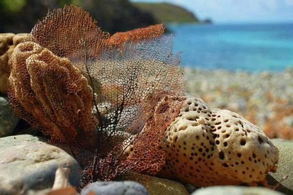 Digital Art - Fan Sponge And Coral by Michael Thomas