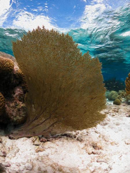 Alejandro Gutierrez Wall Art - Photograph - Fan-tastic Sea Web by Athoyo