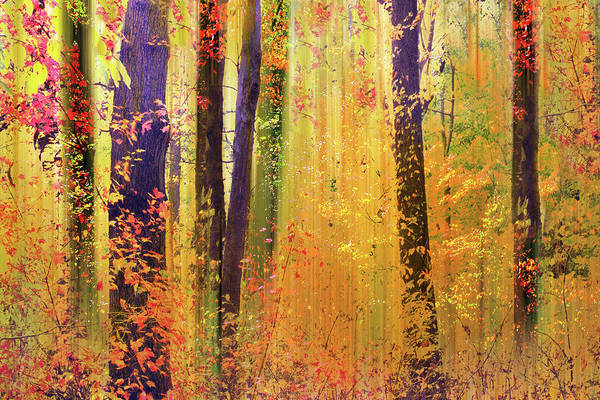 Wall Art - Photograph - Fanciful Foliage by Jessica Jenney