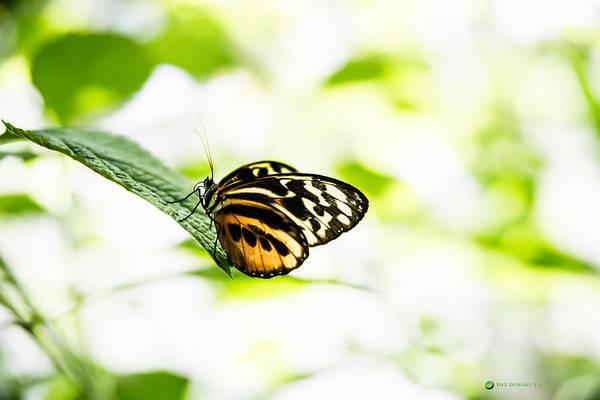 Photograph - Fancy Tigress by Teresa Blanton