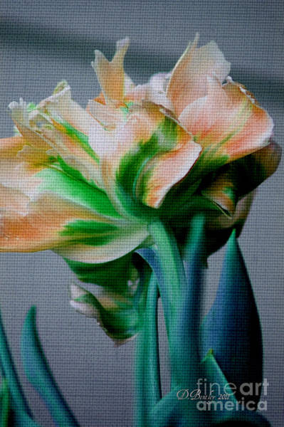 Photograph - Fancy Tulip by Donna Bentley