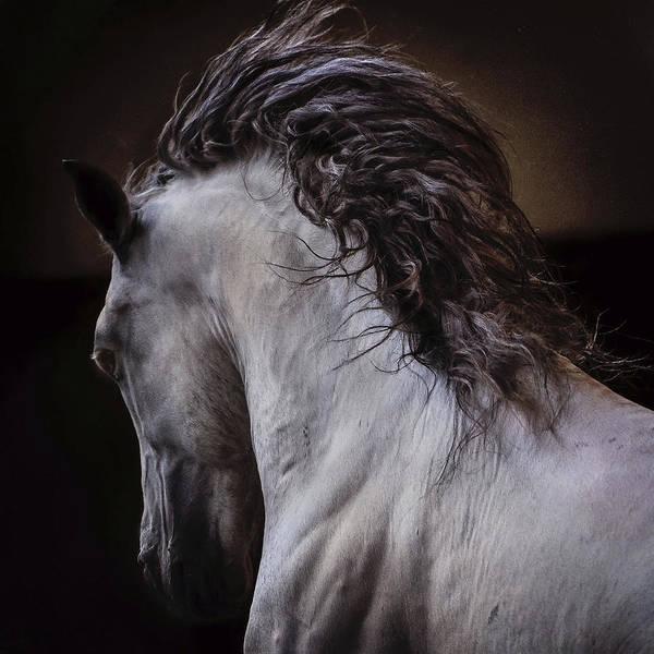 Photograph - Fandi by Pamela Steege