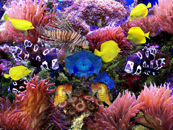 Photograph - Fantasy Aquarium by Michele A Loftus