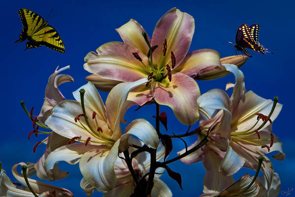 Photograph - Fantasy Lilies by Chris Lord
