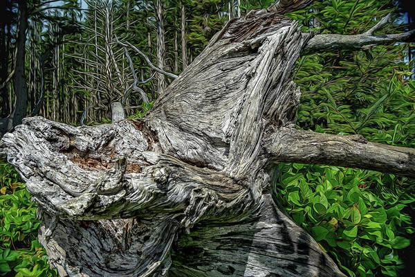Photograph - Fantasy Stump by Bill Posner