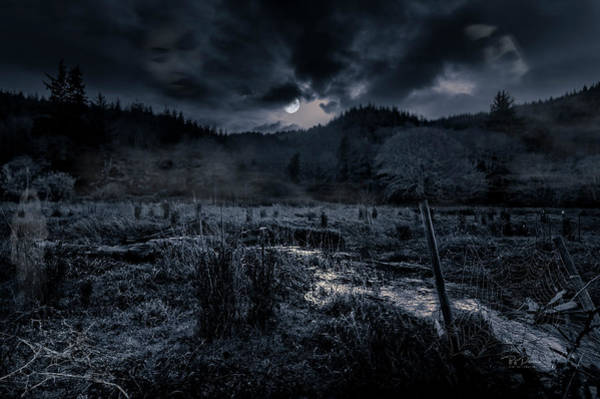 Photograph - Fantasyforestbw by Bill Posner