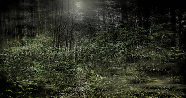 Photograph - Fantasywoods by Bill Posner