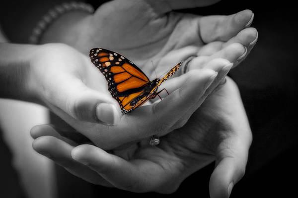 Monarch Butterflies Photograph - Farfalla Di Monarca by Tonino Guzzo