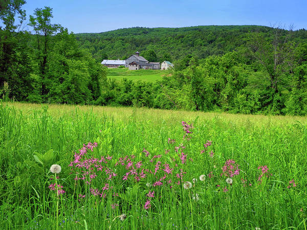 Photograph - Farm Along The Ma At With Wildflowers by Raymond Salani III