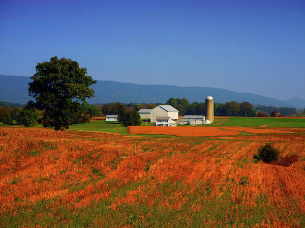 Photograph - Farm Along The Pa At 3 by Raymond Salani III