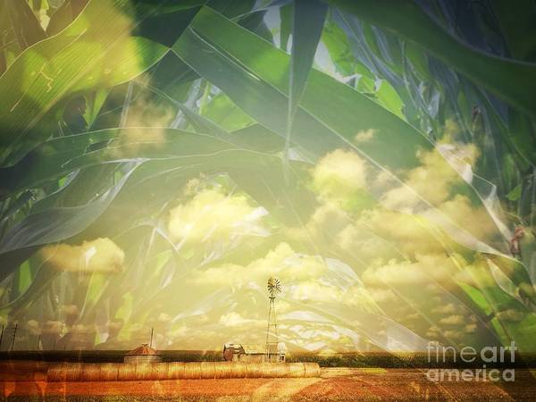 Photograph - Farm And Corn Double Exposure by Iryna Liveoak