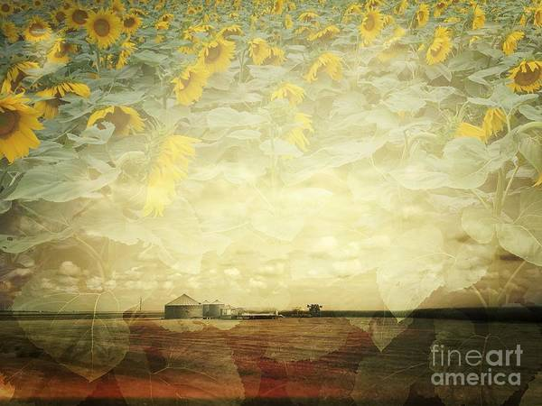 Photograph - Farm And Sunflowers Double Exposure by Iryna Liveoak