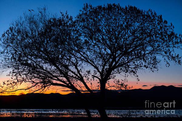 Photograph - Farm Deck Evening by Susan Warren