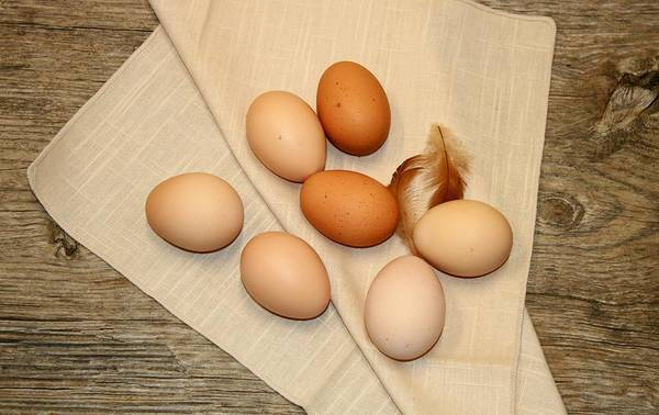 Photograph - Farm Fresh Eggs by Sheila Brown