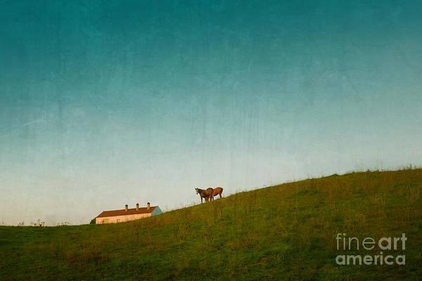 Wall Art - Photograph - Farm Horses by Carlos Caetano