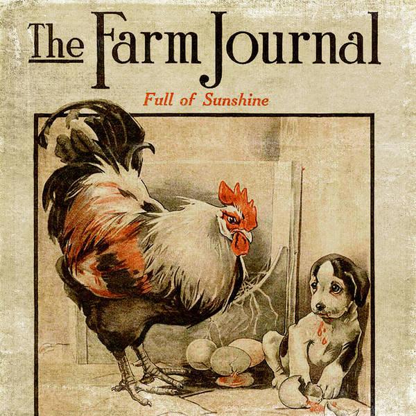 Egg Mixed Media - Farm Journal 1921 by Bonnie Bruno