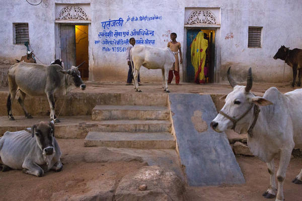 Northern India Photograph - Farm. Orchha by Claude Renault