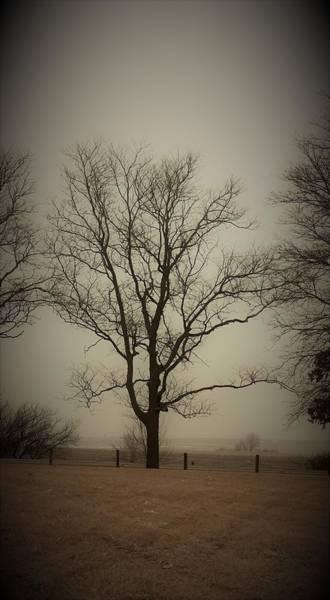 Wall Art - Photograph - Farm Tree by Toni Grote