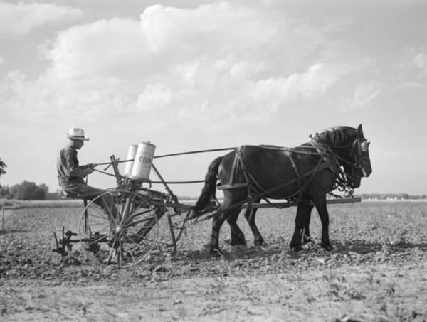 Wall Art - Photograph - Farmer Fertilizing Corn by Arthur Rothstein