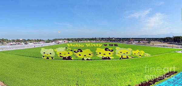 Hello Kitty Wall Art - Photograph - Farmers Create Hello Kitty Images In A Rice Field by Yali Shi