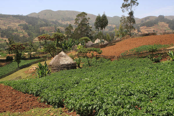 Photograph - Highland Village, Guge Mountains, Ethiopia by Aidan Moran