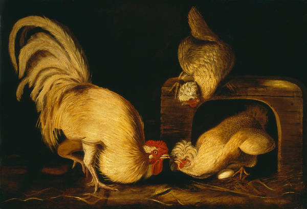 Roost Painting - Farmyard Fowls by Mountain Dreams