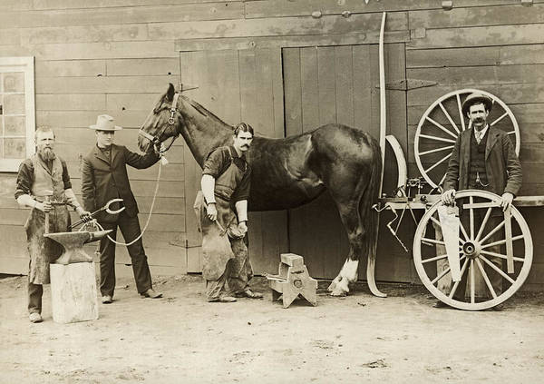 Farrier Photograph - Farrier Shoeing A Horse by Underwood Archives