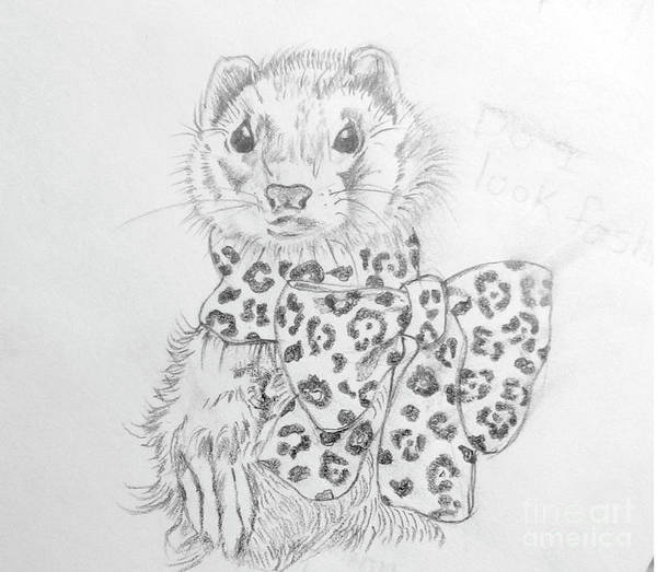 Ferrets Drawing - Fashionable Ferret by Susan Paquette