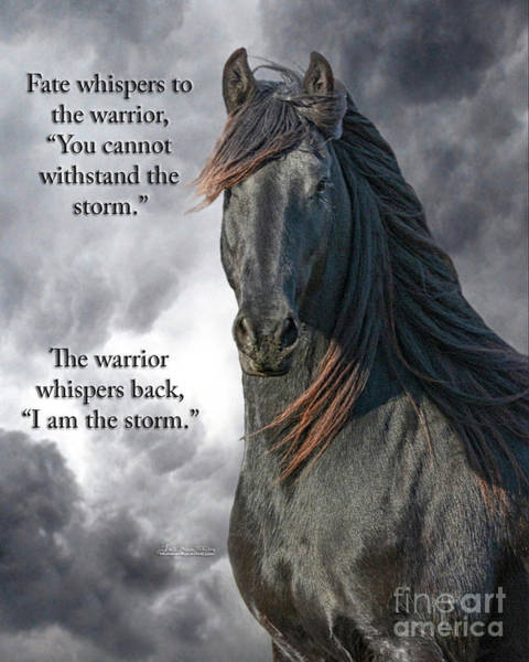 Friesian Horse Photograph - Fate Whispers by Lori Ann  Thwing