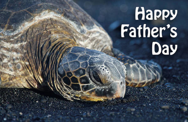 Photograph - Father's Day Honu by Denise Bird