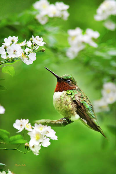 Beautiful Hummingbird Photograph - Fauna And Flora - Hummingbird With Flowers by Christina Rollo