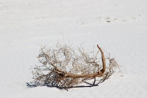 Photograph - Faux Scorpion In White Sands by Colleen Cornelius