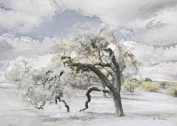 California Oak Digital Art - Faux Winter by Patricia Stalter