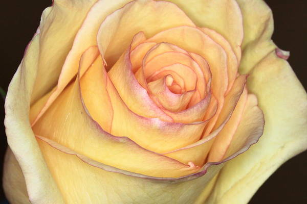 Photograph - Favorite Yellow by Ree Reid