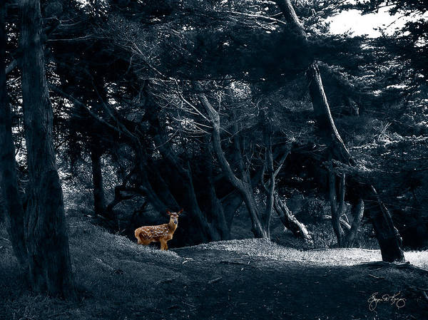 Photograph - Fawn In A Blue Cypress Wood by Wayne King