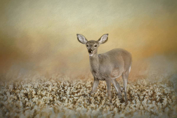 Painting - Fawn In The Cotton Field by Jai Johnson