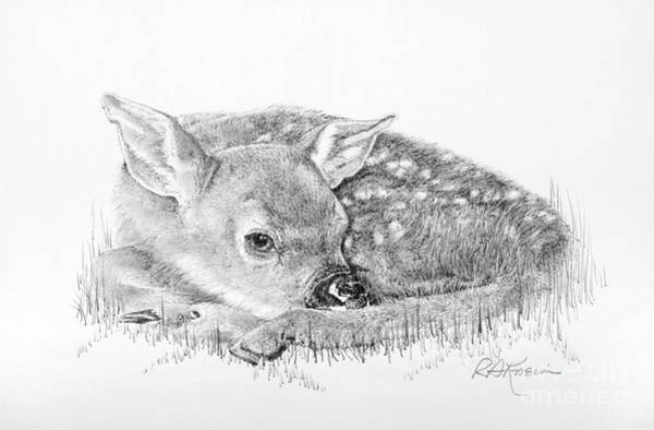 Wall Art - Drawing - Fawn In The Grass by Roy Anthony Kaelin