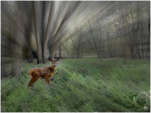 Photograph - Fawn In Morning Sunlight by Wayne King