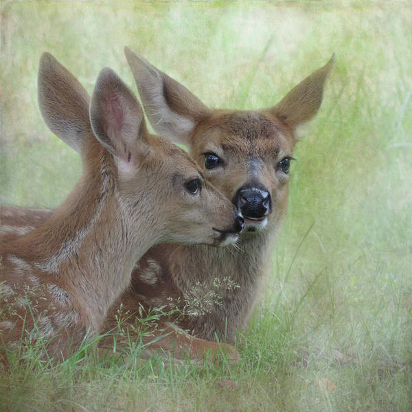 Art Print featuring the photograph Fawn Secrets by Sally Banfill