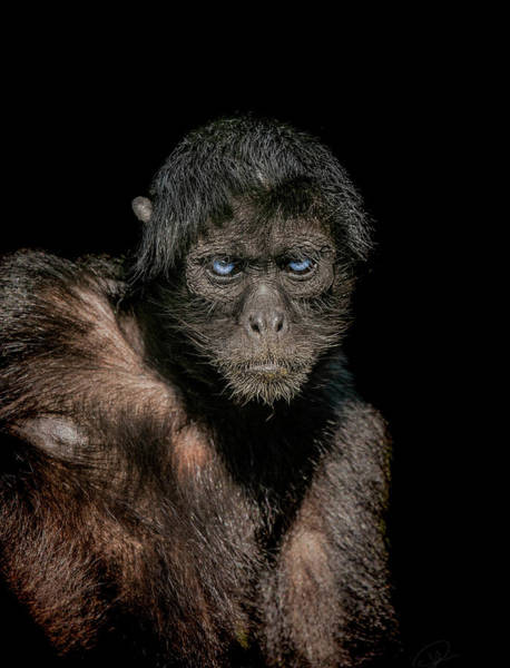 Primate Photograph - Fearless by Paul Neville