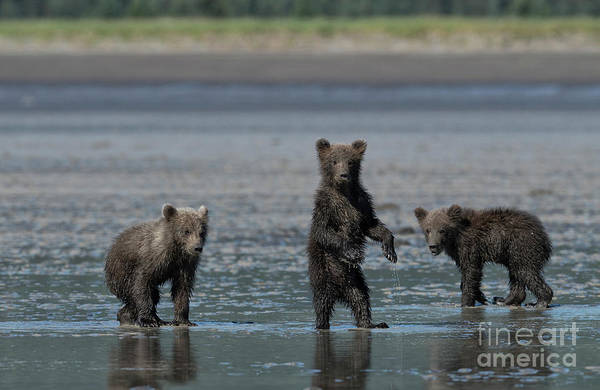 Wall Art - Photograph - Fearsome Threesome by Sandra Bronstein