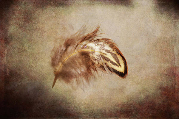 Wall Art - Photograph - Feather 3 by Kevin O'Hare