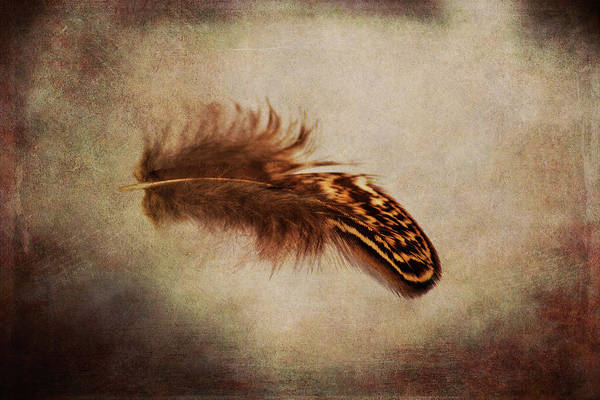 Wall Art - Photograph - Feather 4 by Kevin O'Hare