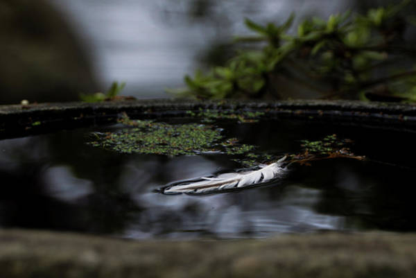 Photograph - Floating On A Still Pond by Marilyn Wilson