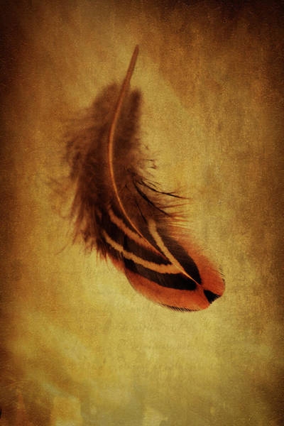 Wall Art - Photograph - Feather 5 by Kevin O'Hare