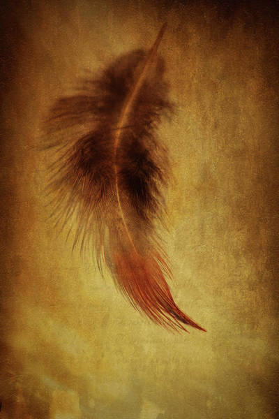 Wall Art - Photograph - Feather 6 by Kevin O'Hare