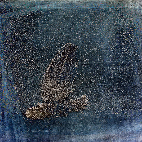 Photograph - Feather And Down by Randi Grace Nilsberg
