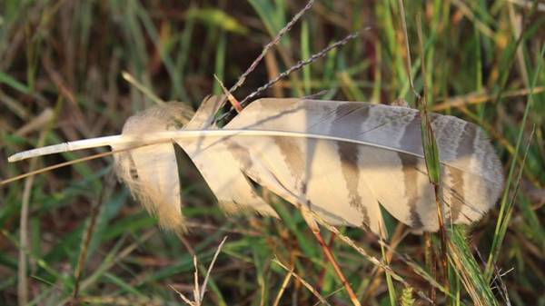 Wall Art - Photograph - Feather In The Grass by Weathered Wood